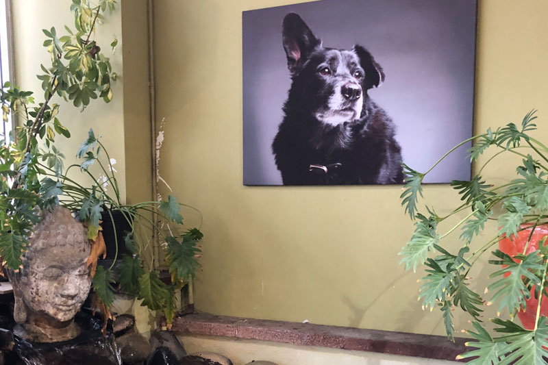 The Urban Pet Best Pet Supply In Los Angeles By Zack Grey